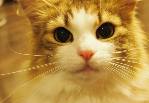 自制猫咪玩具 轻松简单省荷包